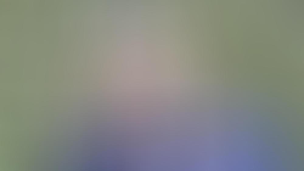 Eine offenbar entzückende Glatze: Prinz William hat trotz seiner jungen Jahre nicht mehr viel Haarpracht zu bieten.
