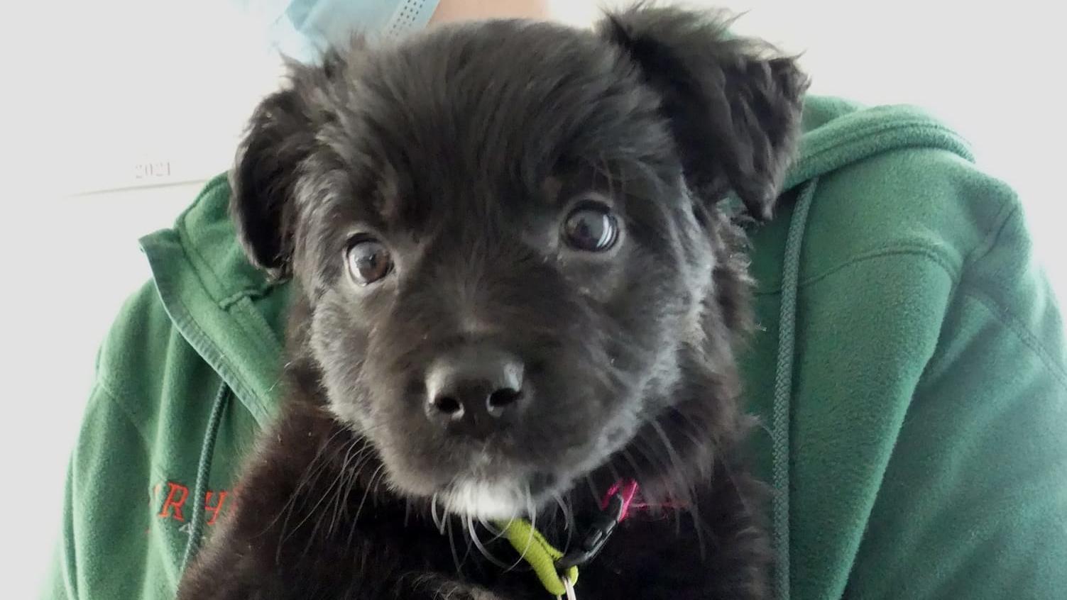 """Feivel gilt als der erste """"Corona-Hund"""". Er wurde einfach in einem Park ausgesetzt. Das Tierheim gibt ein Update, wie es dem Kleinen geht."""