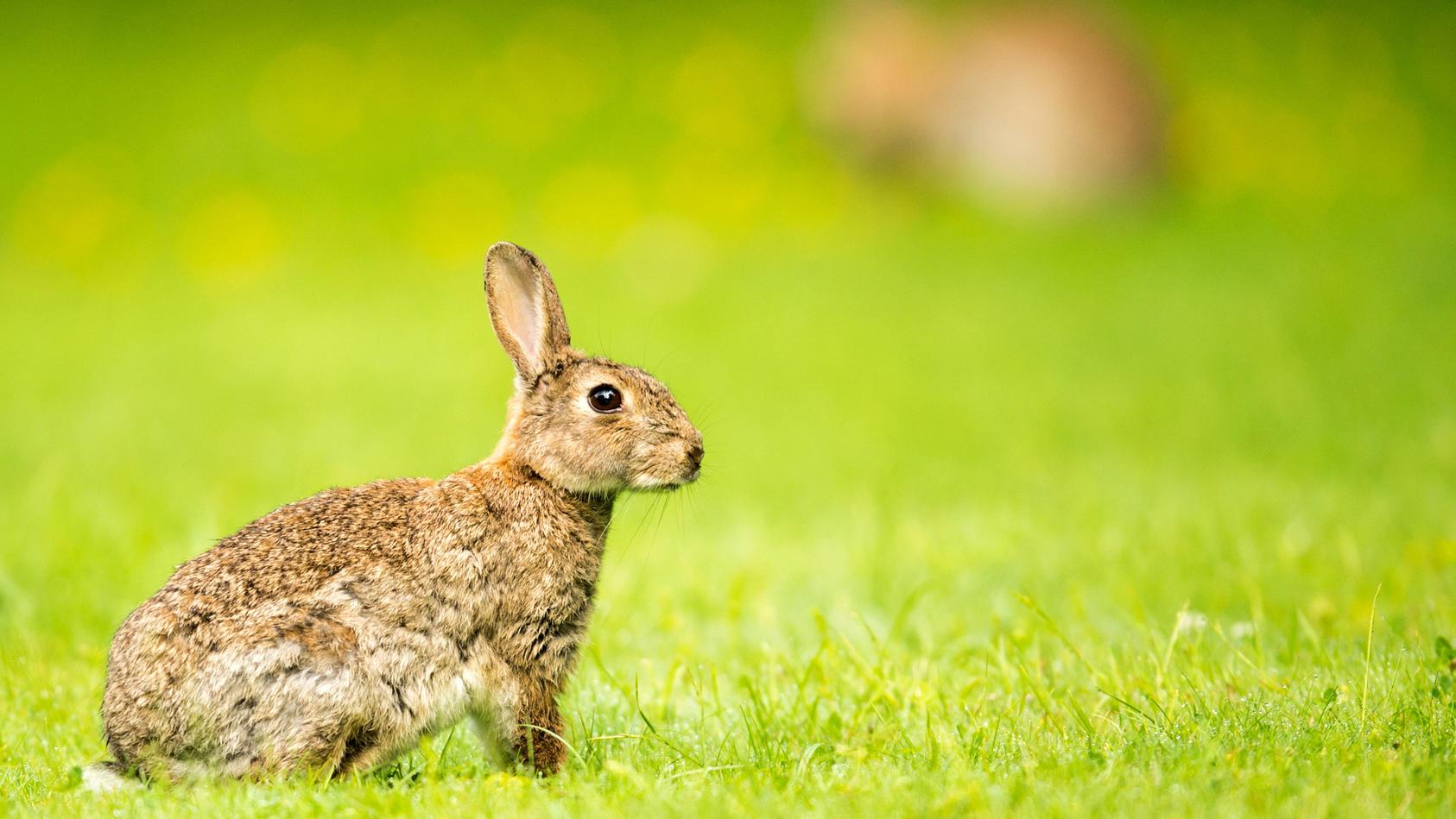 Hase oder doch Kaninchen? Berliner zum Zählen aufgerufen.