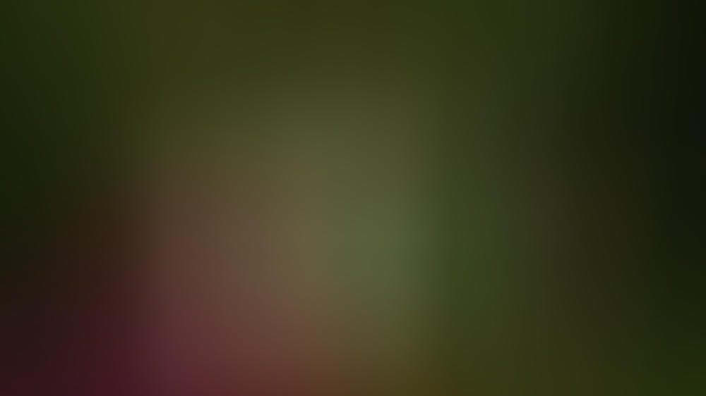 Vorsicht beim Bärlauch sammeln: Die grünen Blätter sind leicht zu verwechseln.
