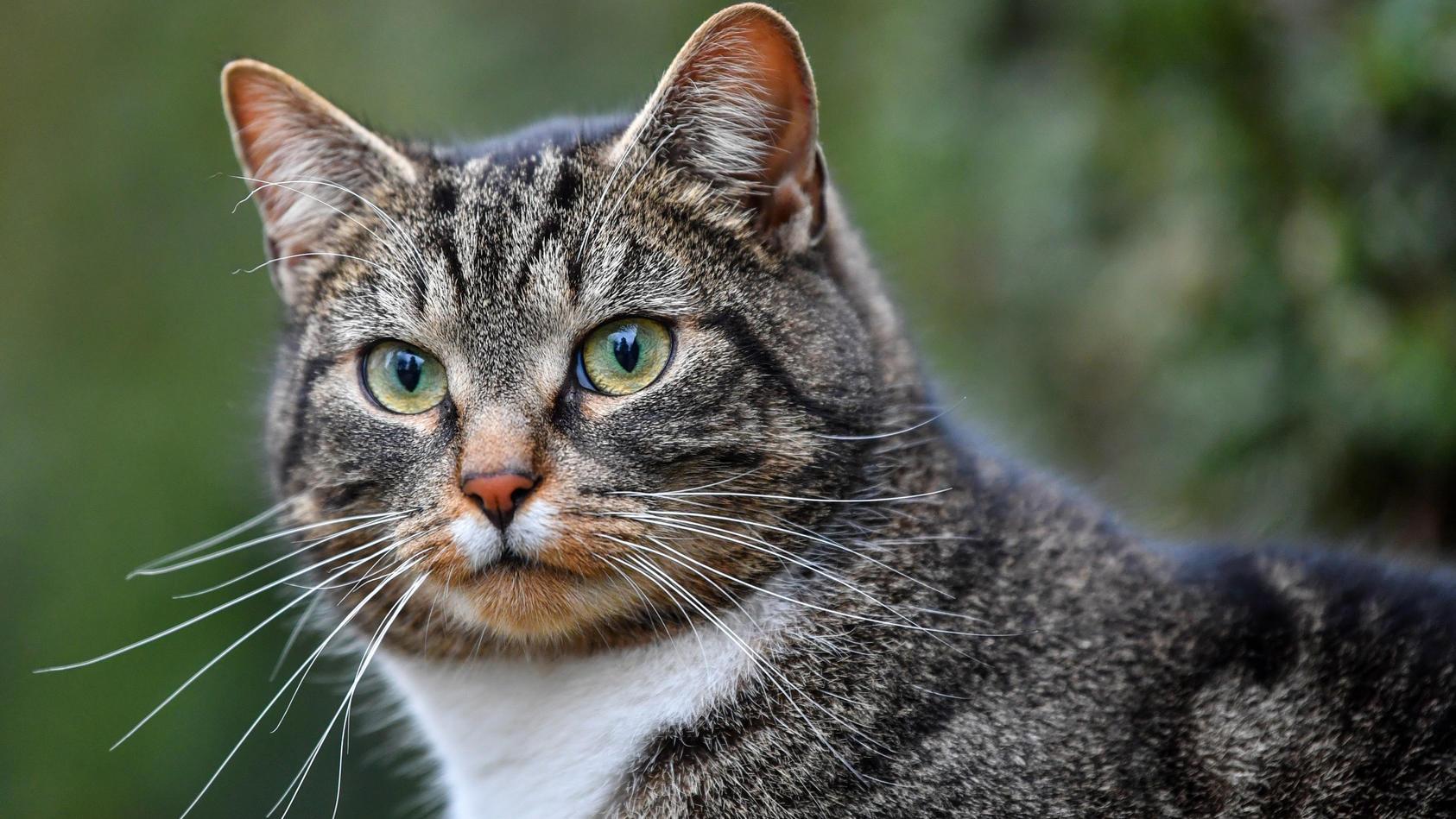 Symbolfoto Katze.
