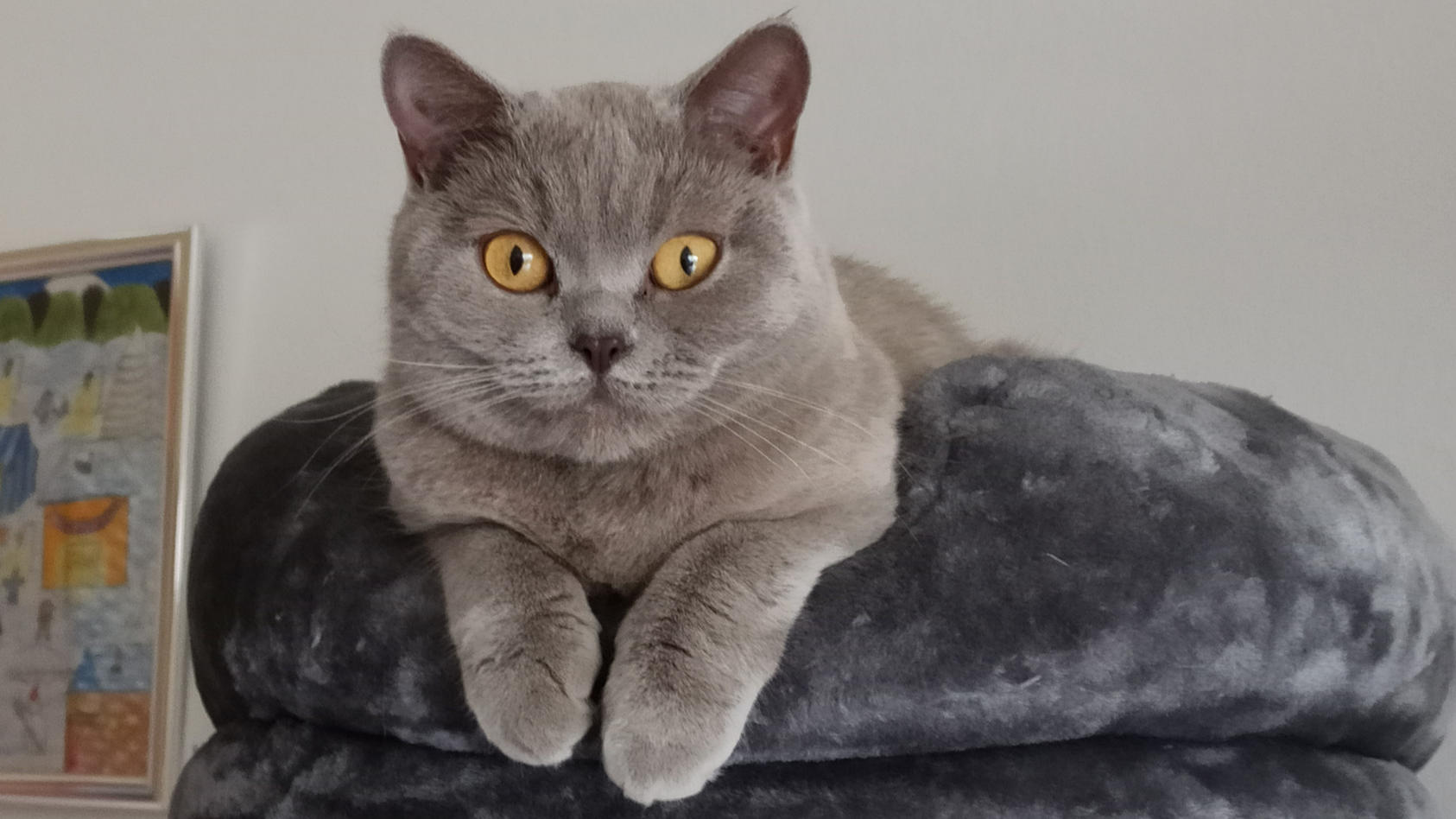 Katze Charly war 10 Monate verschollen.