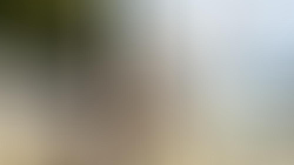 """Prinz Marcus von Anhalt macht sich bei """"Promis unter Palmen"""" nicht nur Freunde."""