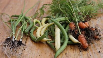 Biologisch angebaute Lebensmittel helfen unseren Böden.