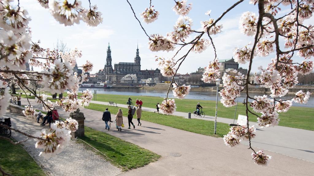 11.04.2021, Sachsen, Dresden: Passanten gehen am Ufer der Elbe vor der Kulisse der Altstadt hinter einer blühenden Zierkirsche entlang. Foto: Sebastian Kahnert/dpa-Zentralbild/dpa +++ dpa-Bildfunk +++