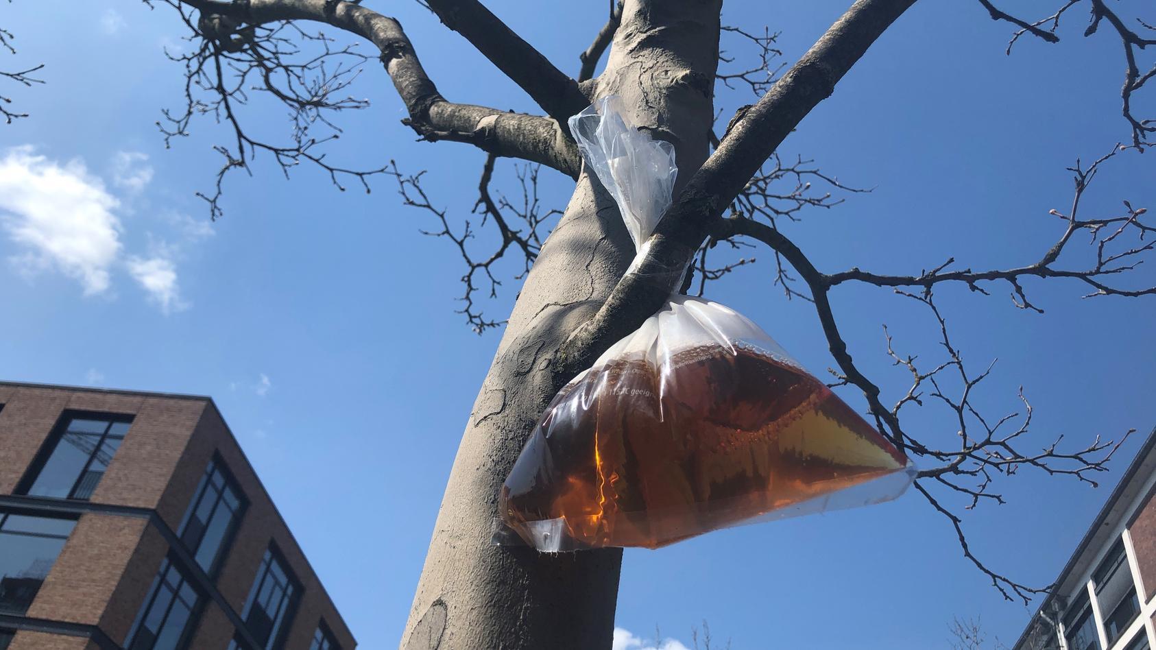 Nachgestellte Szene: Urinbeutel im Baum.
