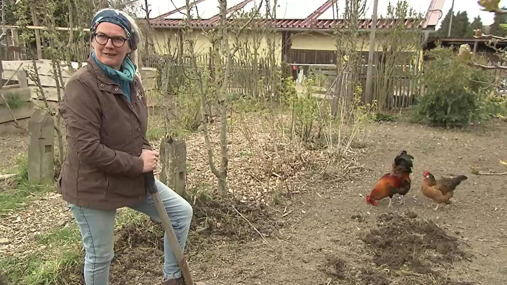 """Frauchen Karin Pfeifer-Rockenfeller muss wegen ihres Hahns """"Meister Eder"""" vor Gericht. Angeblich kräht das Tier zu den falschen Zeiten zu laut."""