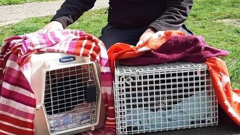 Katze Luzie und Kater Gero sitzen in ihren Transportboxen hinter Gittern. Fast schon symbolisch - denn in den Boxen werden sie ins Gefängnis gebracht.