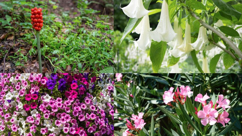 Giftige Blumen im heimischen Garten