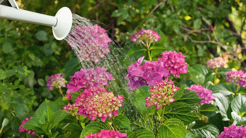 Der bewusste Umgang mit Wasser und dem Boden spielt beim klimafreundlichen Gärtnern eine besonders wichtige Rolle.