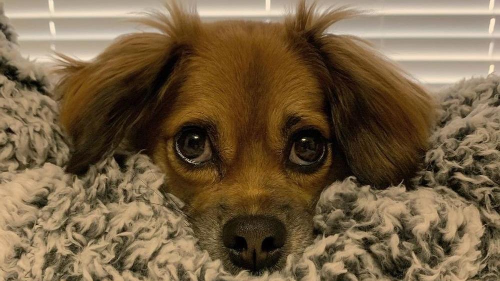 Tilly kam mit dem Kurzwirbelsäulensyndrom zur Welt.