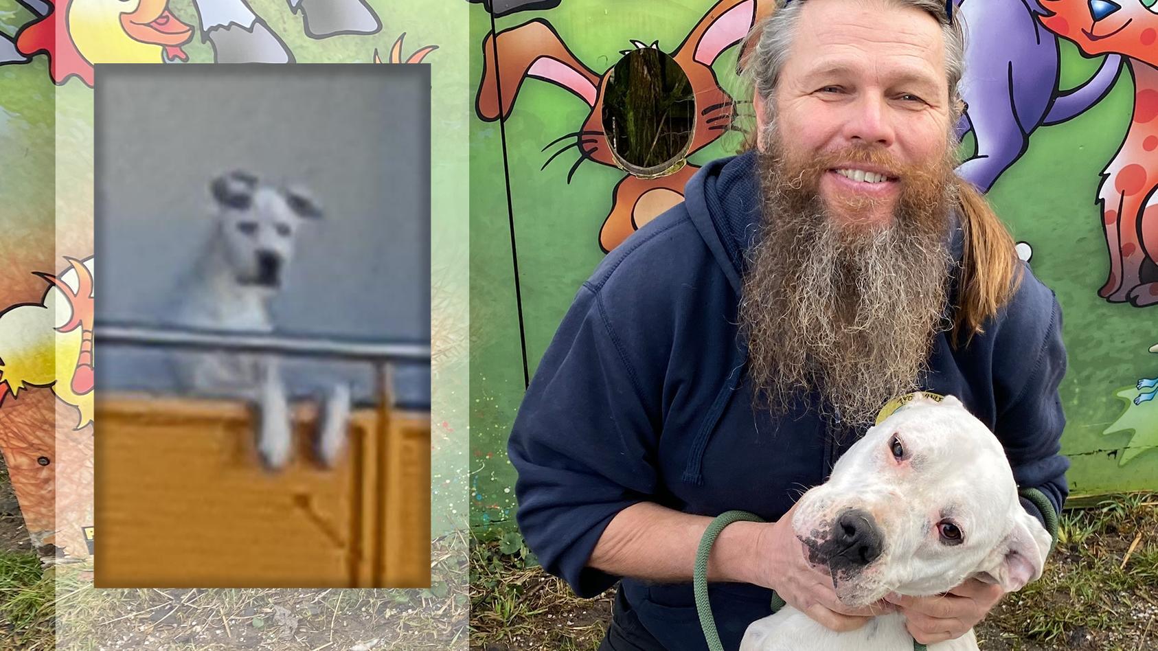 Hund Jimmy durchlebte schwere Zeiten, jetzt hat er aber sein Glück gefunden.