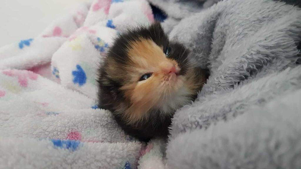 Mini-Furby Katze Leipzig