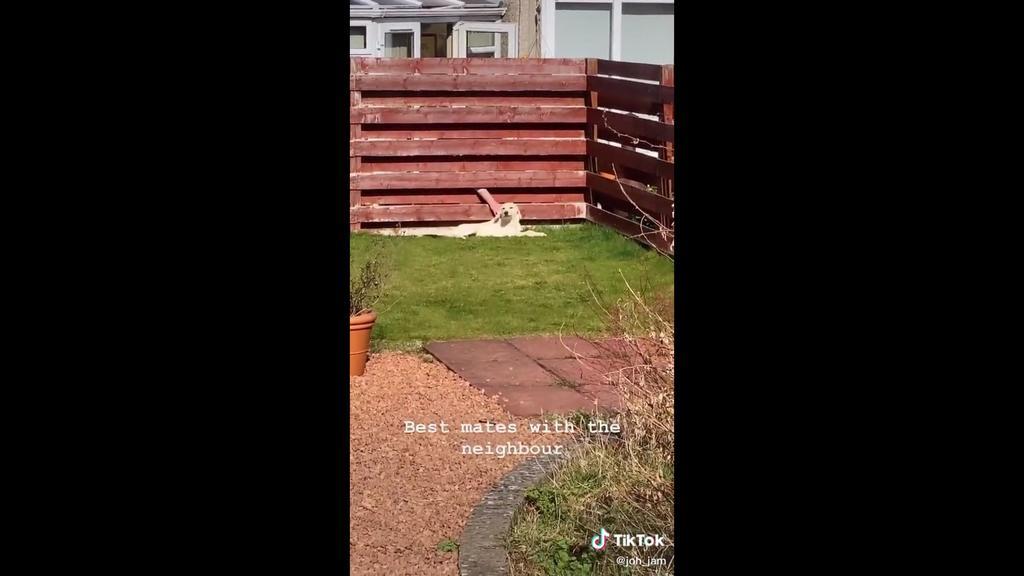 Der Hund von Jo-Hannah Jamieson holt sich am Gartenzaun Streicheleinheiten vom Nachbarn ab.