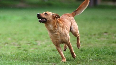 In Bayern soll ein Mann eine Frau angegriffen haben - ihr Hund soll den Angreifer dann verjagt haben (Symbolbild).