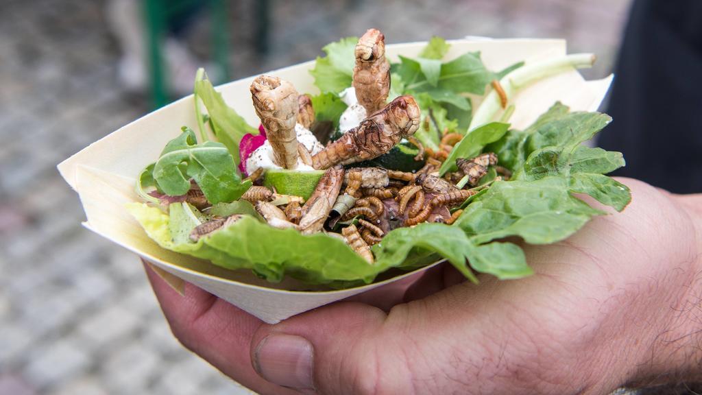 Snack mit Insekten, ein Mann hält auf einer Street Food Veranstaltung eine Schale mit Heuschrecken, Mehl- und Buffalowürmern auf Salat. Deutschland *** Snack with insects, a man holding a bowl of grasshoppers, flour and buffalo worms on salad at a s