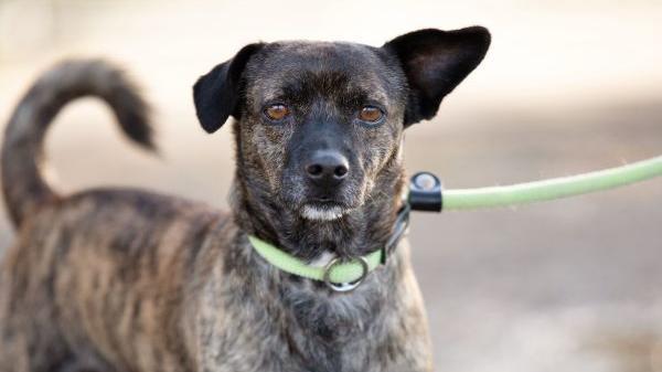 Toto wurde wegen seiner Erkrankung ins Tierheim gegeben.