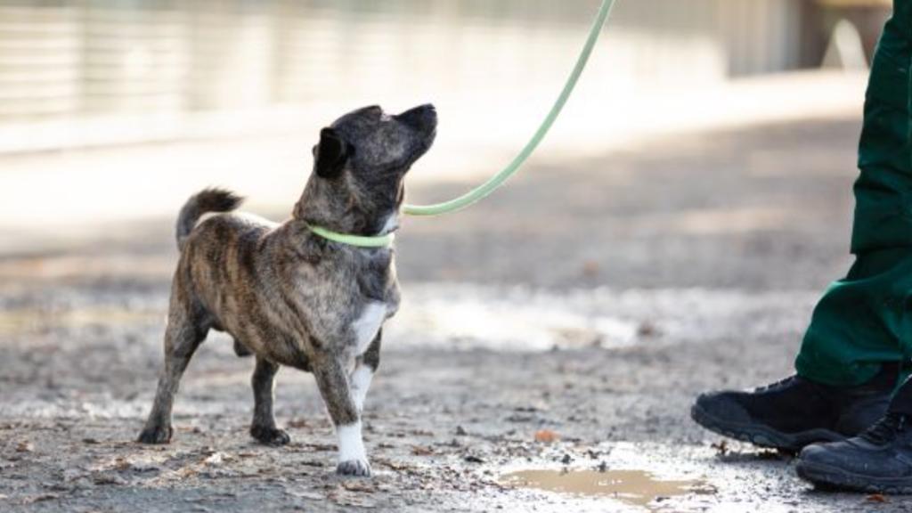 Der dreijährige Toto lebt im Tierheim Berlin