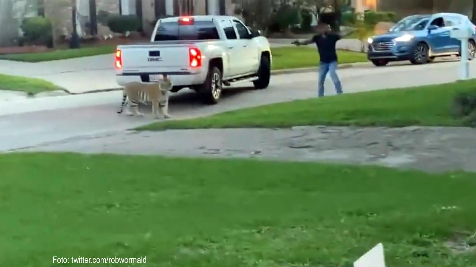 Tigeralarm in Houston.
