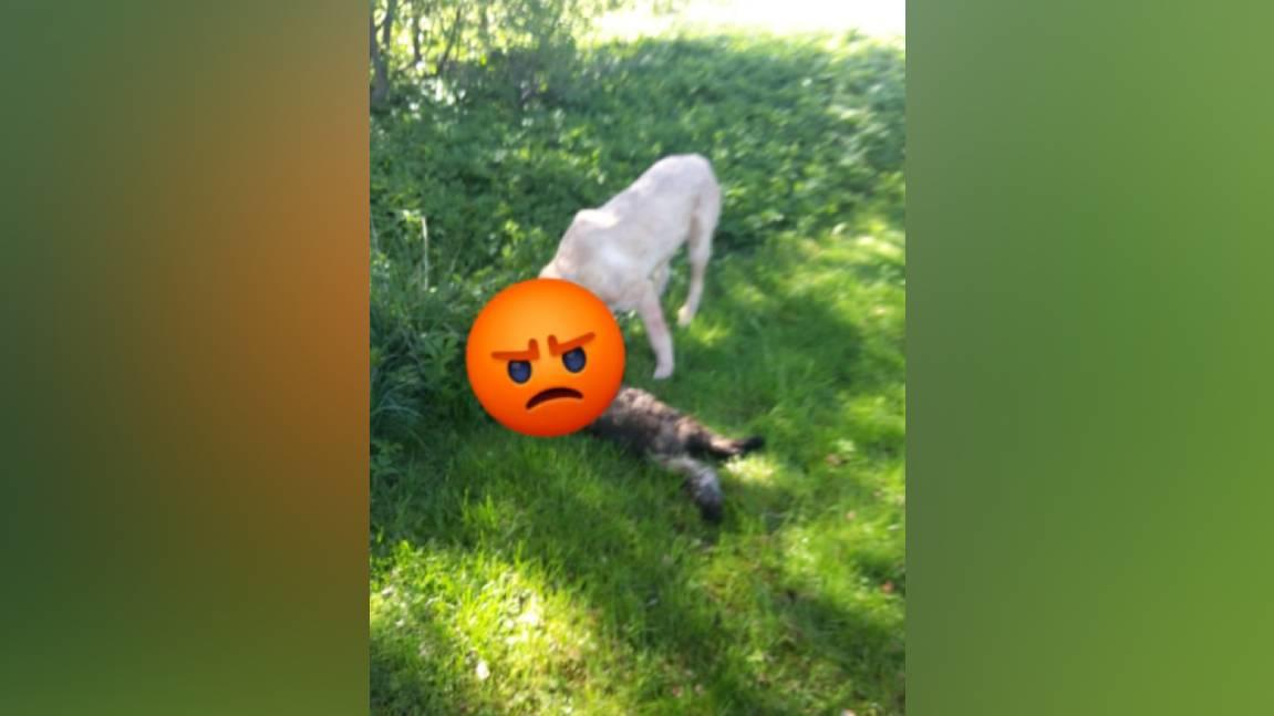 Die Polizei bittet um Hinweise: Wer kennt diesen brutalen Hund?
