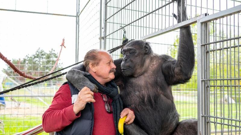 Klaus Köhler, Direktor vom Zirkus Belly, schmust mit dem Schimpansen Robby. Foto: Philipp Schulze/dpa/aktuell