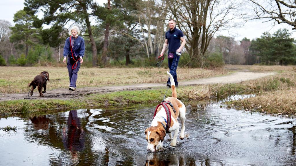 Großbritanniens einsamster Hund, Hündin Bella, wartet sehnsüchtig auf ein neues zu Hause, mit einem neuen Herrchen oder Frauchen.