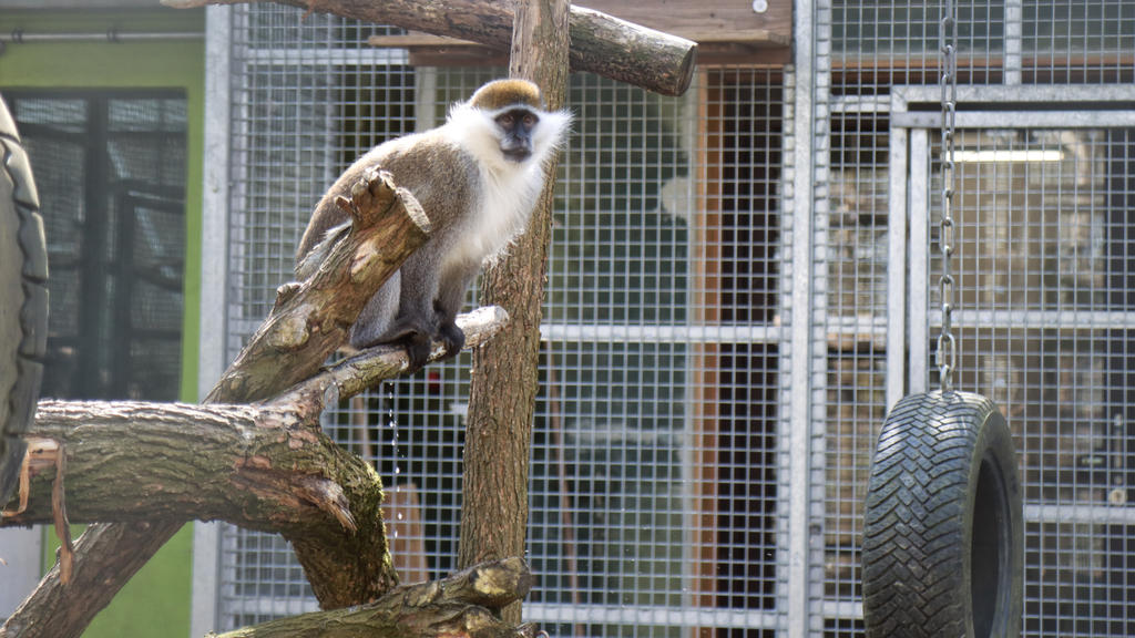 """Glückliche Affen in der Wildtierstation von """"Aktion Tier"""""""