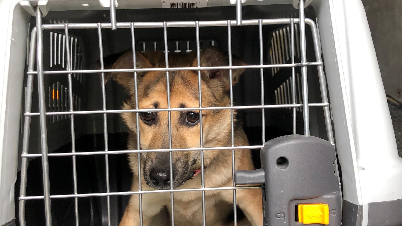 Die Polizei hat in Bremen Hunde aus einem Transporter befreit