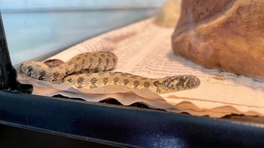 Schlange in Tierheim
