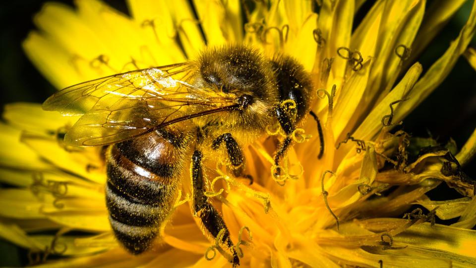 Blumen gehören dazu, aber es gibt noch viele weitere Möglichkeiten, wie Sie Bienen eine Freude bereiten können.
