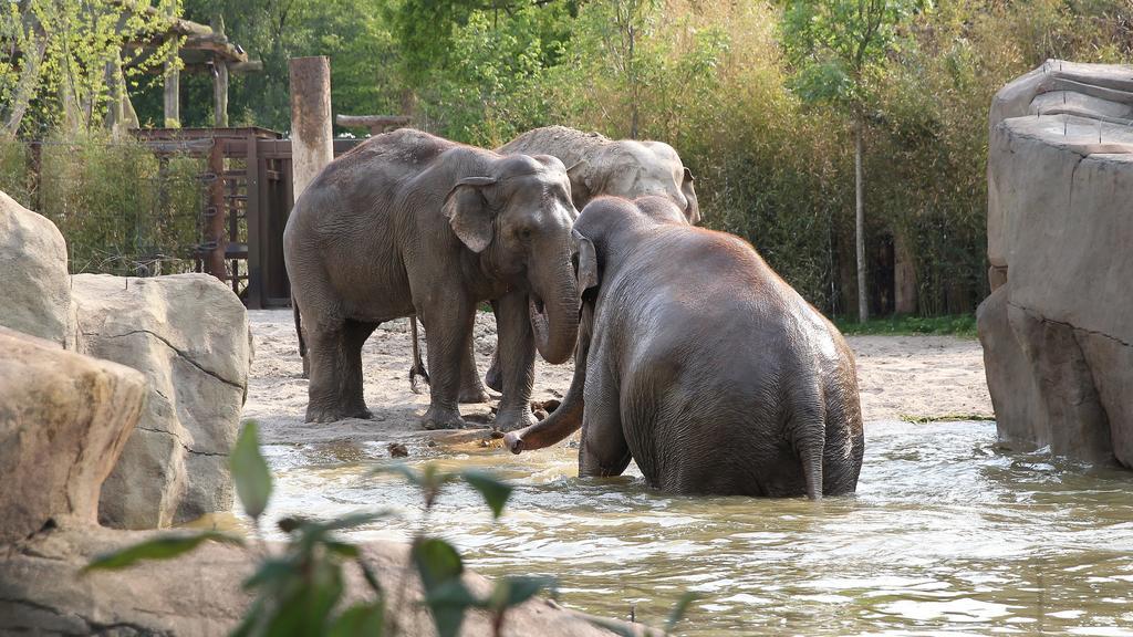 Auch Elefanten gibt es im Allwetterzoo Münster zu sehen,