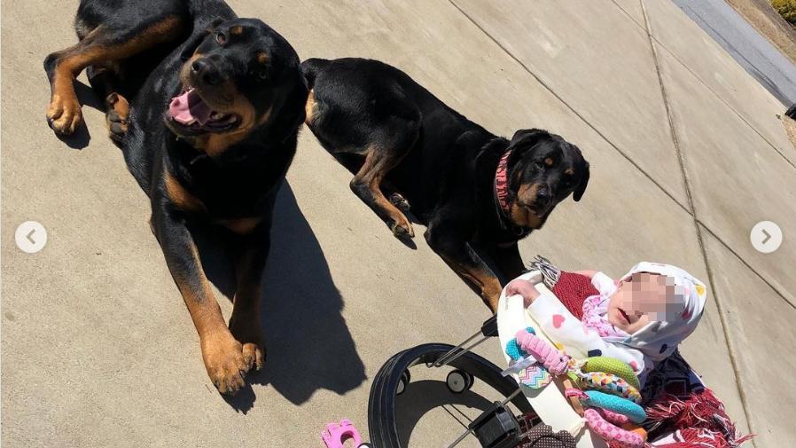 Die 10 Monate alte Malia wurde von den beiden Familienhunden getötet.