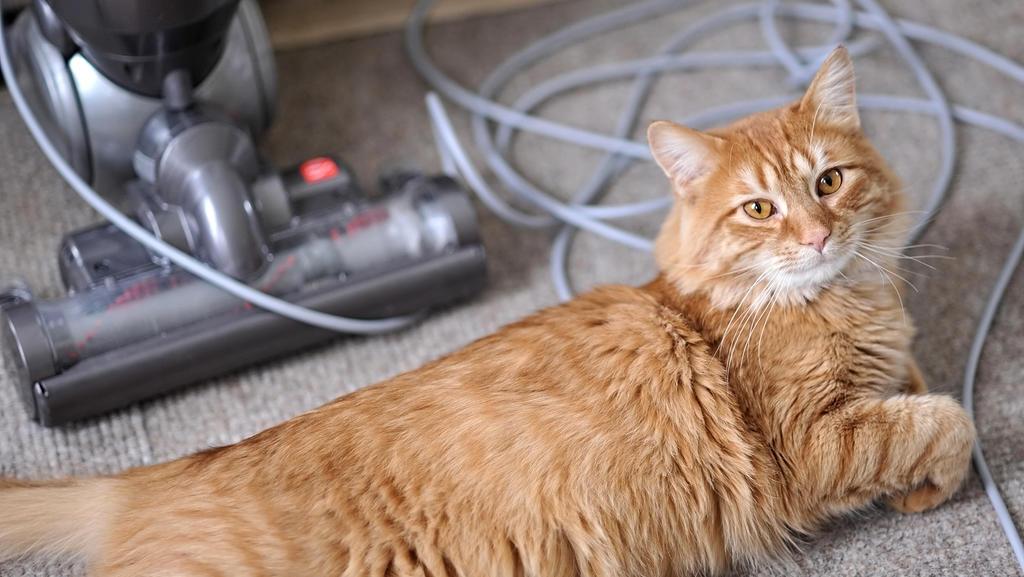 Eine Katze liegt auf dem Boden, hinter ihr ist ein Staubsauger zu sehen.