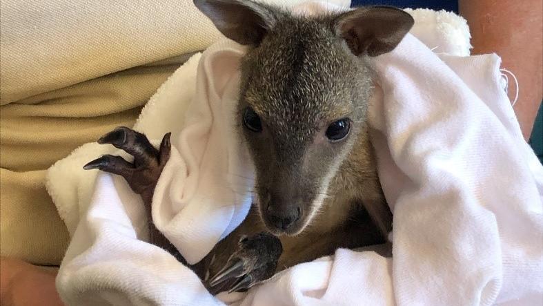 Das kleine Känguru in den Armen von Susanne Meyer