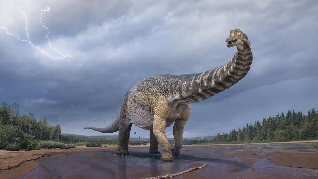 HANDOUT - 11.07.2018, Australien, ---: Eine künstlerische Darstellung zeigt den Dinosaurier Australotitan cooperensis, oder den Südtitan. Paläontologen haben bestätigt, dass Queensland einst die Heimat eines der größten Dinosaurier der Welt war.    (