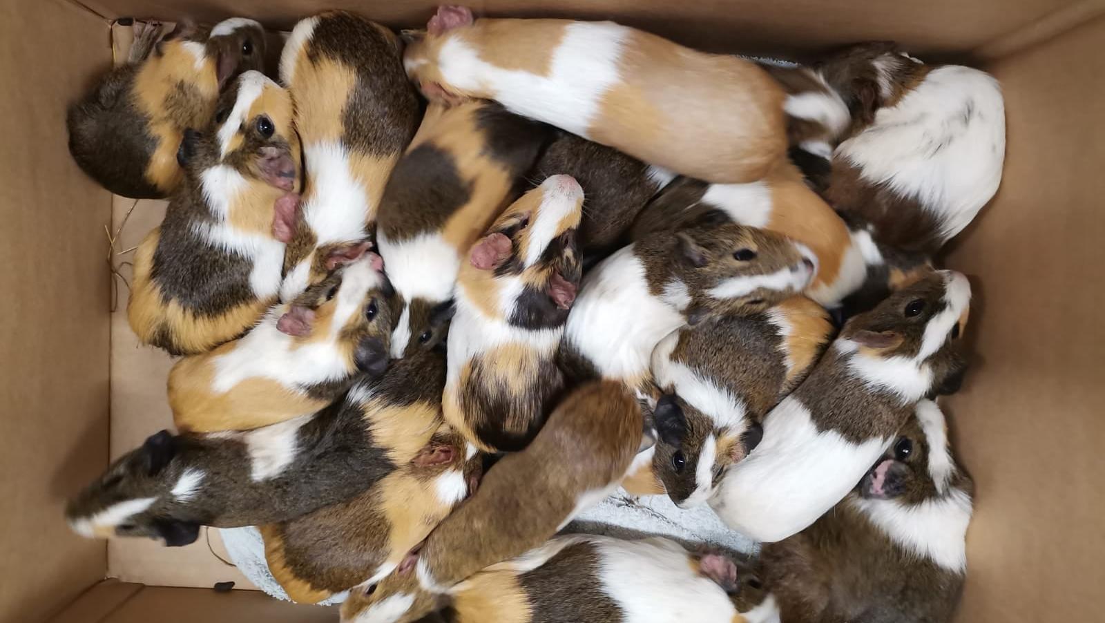 Gerettet aus kleinen Boxen: Die Tiere hatten tagelang weder Wasser noch Futter.