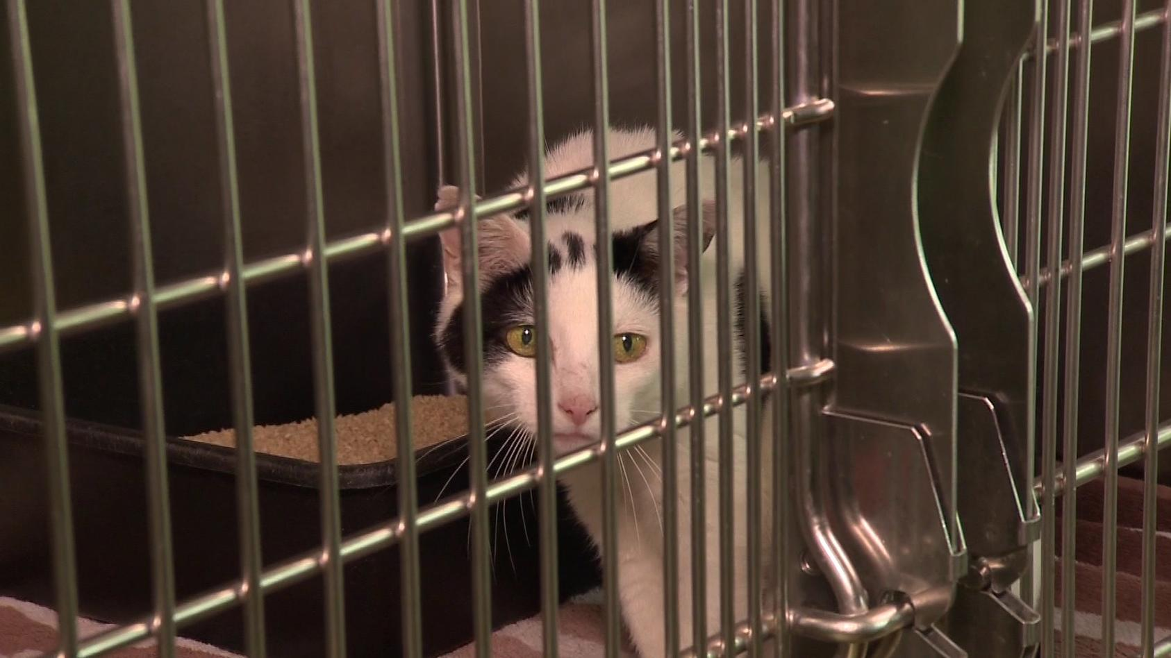 Diese Katze überlebte den Brand im Tierheim