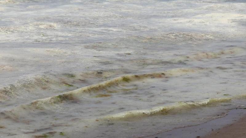 Auf dem Wasser am Ostseestrand schwimmt ein gelb-grüner Teppich aus Kiefernpollen. Foto: Bernd Wüstneck/dpa-Zentralbild/dpa/Archivbild