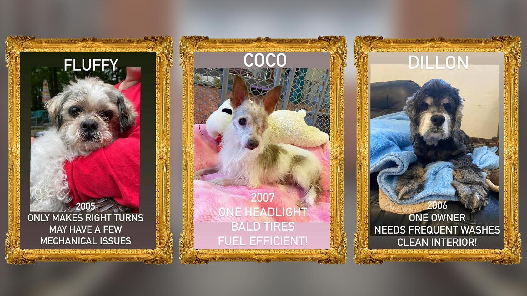 Diese Hunde-Opis suchen ein liebevolles neues Zuhause