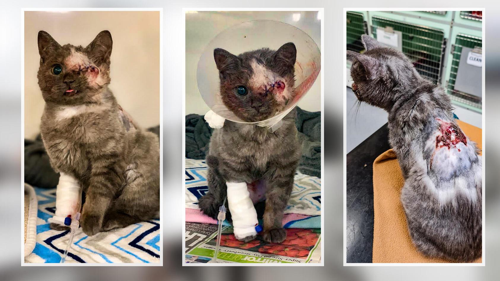 Eyela kam in einem extrem schlechten Zustand beim Tierarzt an
