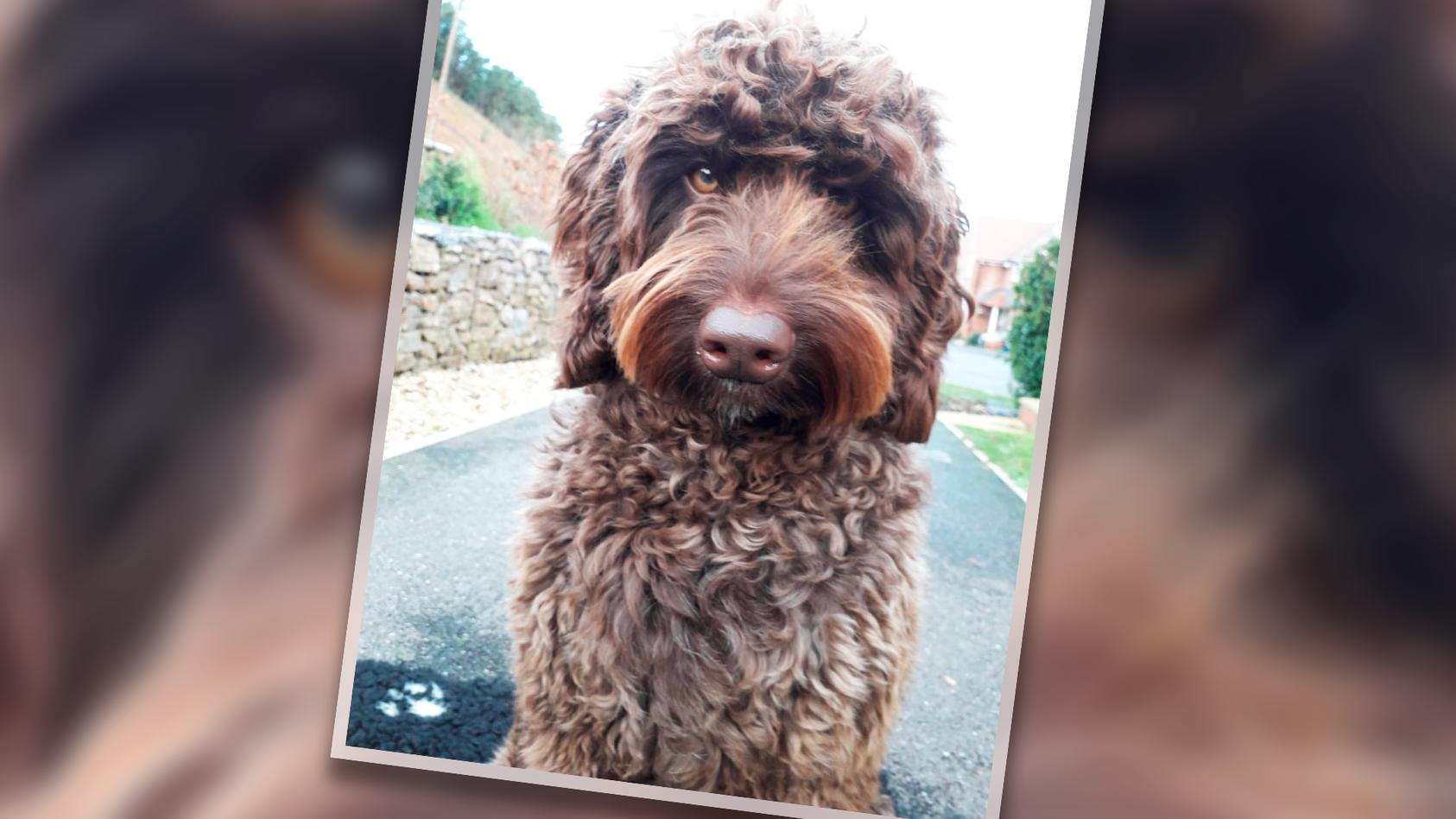 Therapiehund Digby  ist ein echter Held!