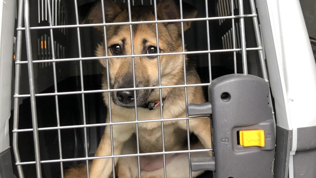 Tierheim Bremen verhängt wegen Überfüllung Aufnahmestopp. Corona-Rücknahmewelle bei Haustieren erwartet