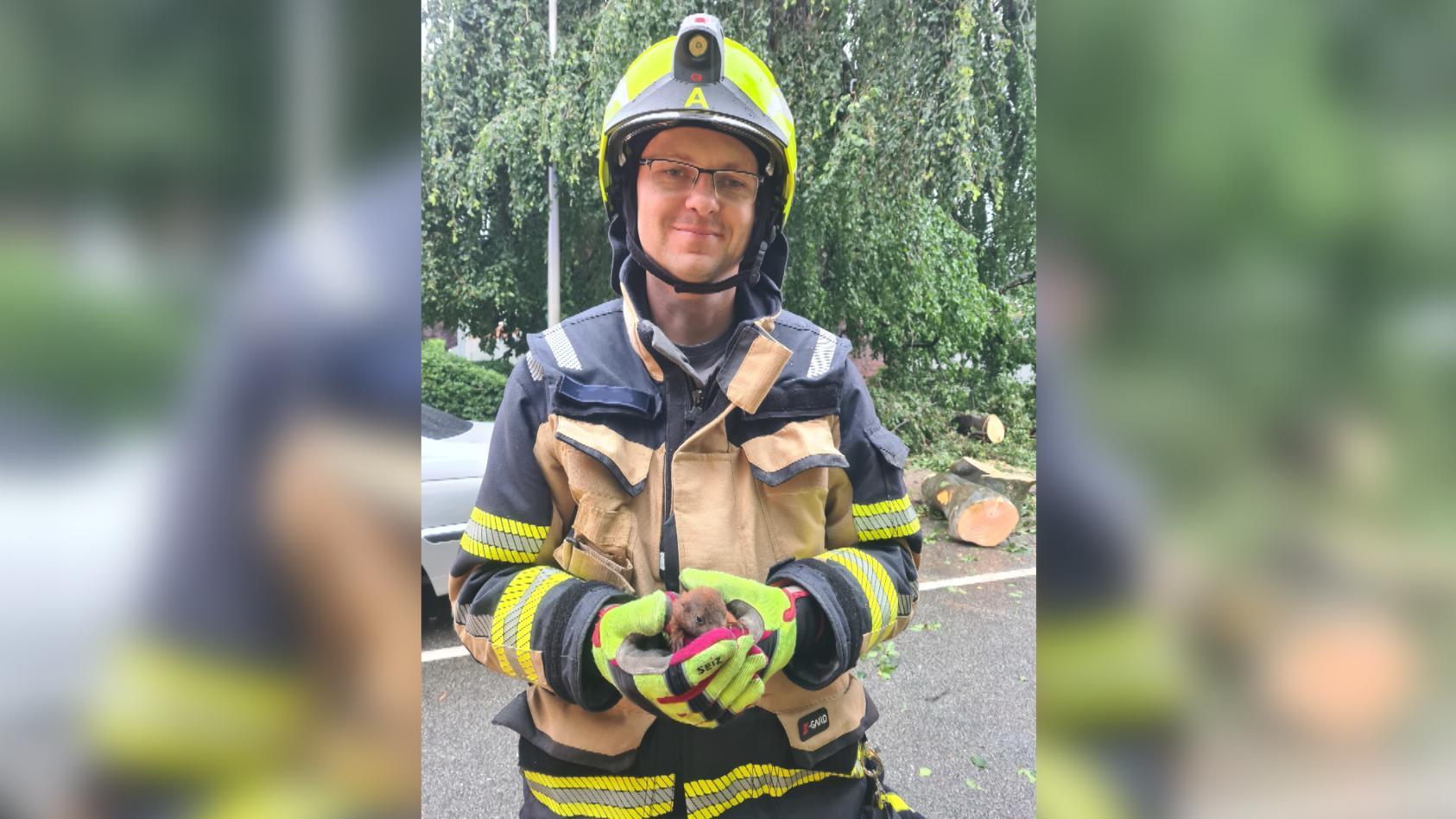 Die Feuerwehr Schenefeld  rettet ein Baby-Eichhörnchen in einem herabgefallenden Ast.