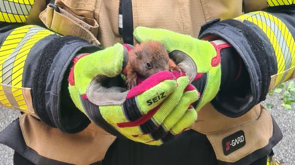 Ein Baby-Eichhörnchen in den Händen eines Feuerwehrmannes