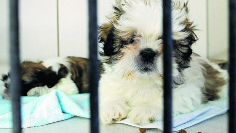 Fieser Tierhandel: 92 Welpen aus Transporter gerettet