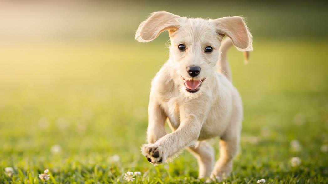 Die richtige Vorbereitung auf das Fotoshooting mit Tier ist das A und O, wenn das perfekte Hundefoto gelingen soll.