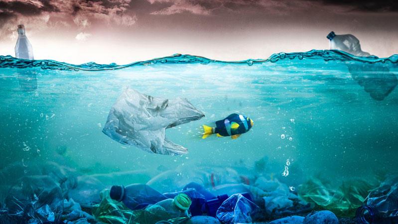 Nemo in Gefahr! Reisende können aktiv dazu beitragen, das Müllproblem nicht noch größer zu machen.