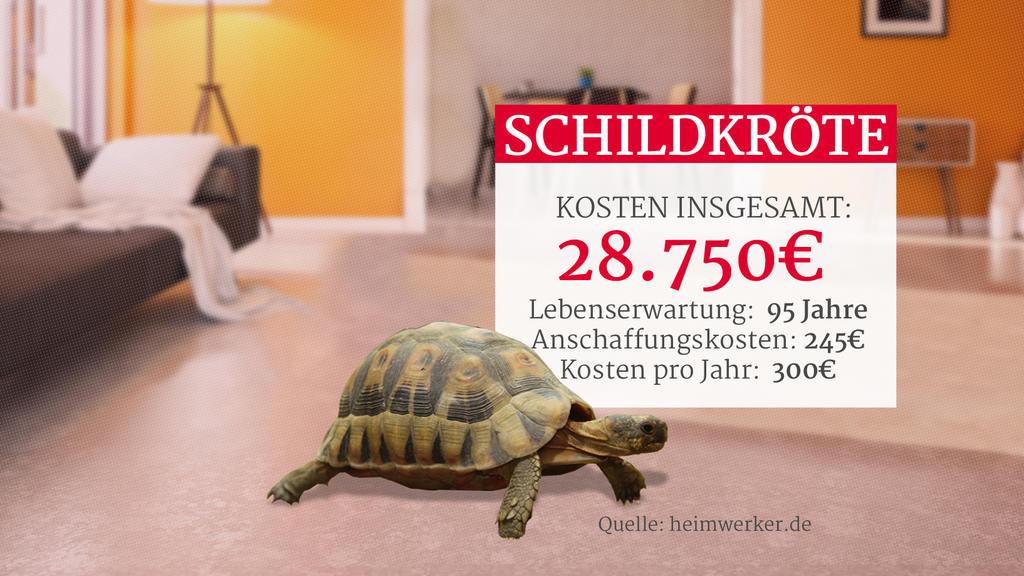 Grafik: Kosten einer Schildkröte als Haustier