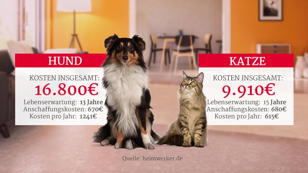 Gesamtkosten für Hunde und Katzen als Haustier
