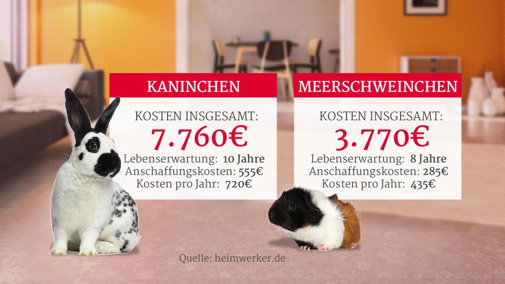 Grafik: Kosten von Kaninchen und Meerschweinchen als Haustier